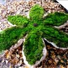 Как вырастить мох на участке