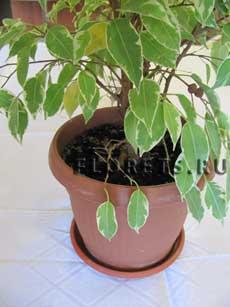 благоприятнее дни для пересадки комнатных растений