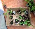 Транспортировка растений на машине: подготовка, упаковка, сложности и последствия