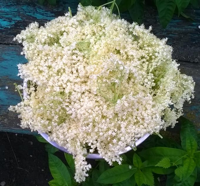 Собранные цветки