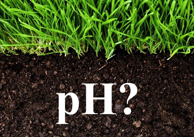 Как определить кислотность почвы на своем участке