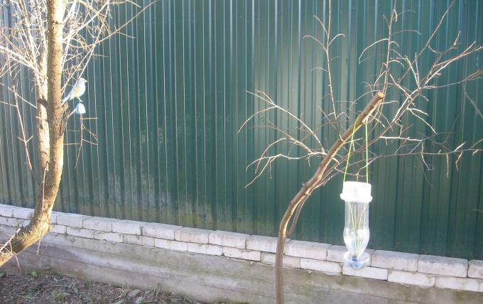 Приводим сад в порядок после зимы