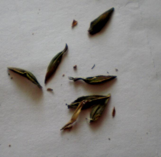 семена разной формы